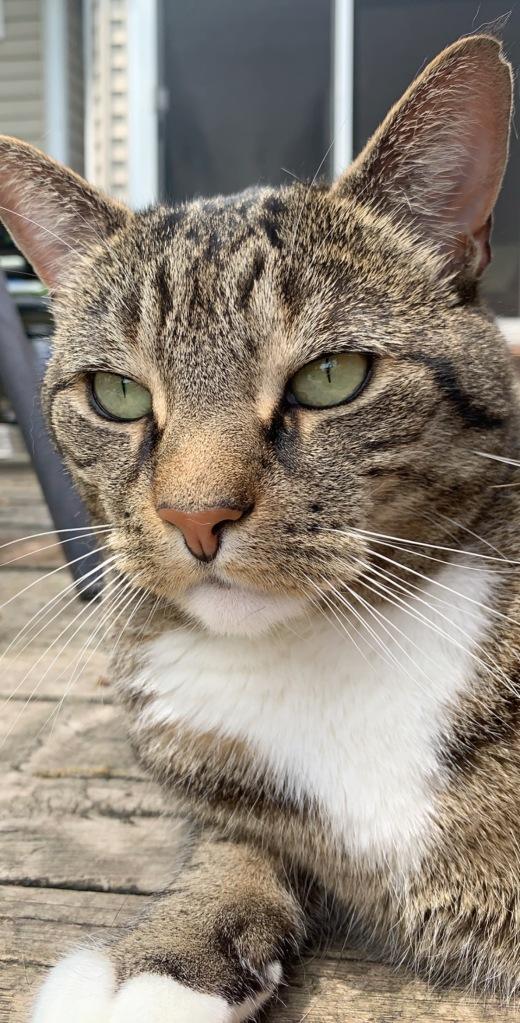 Tabby cat with green eyes: Arthas.